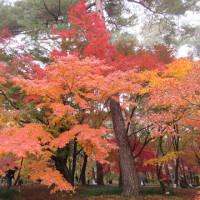 紅葉見頃の森林公園へGo!