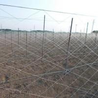 晴耕雨読日記 平成29年6月28日 水曜日 長芋畑のネット張り