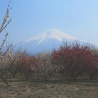 富士山 富士宮の春一番の彩追い...