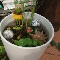 きのこに似た葉をニョキニョキと伸ばす水生の観葉植物