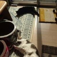 猫が落ちてるリビング