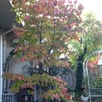庭は秋景色です!