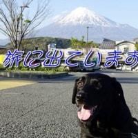 「 箱根の山 」をさまよってます・・。