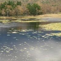 知床五湖は一湖だけ