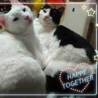 Cute 🐈