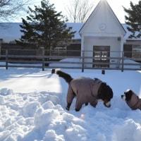 冬季『さんりん舎』視察へ~今年も宜しくお願いいたします