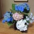 91.紫陽花の花