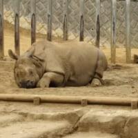 4月20日 2年生 多摩動物公園遠足