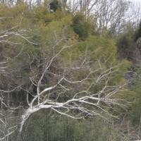 冬枯れの樹の美