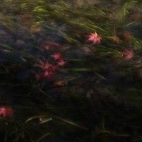 近水園の紅葉