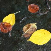 秋雨? に濡れる草花
