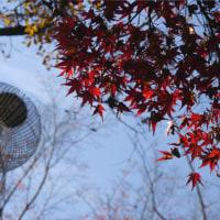 見上げた秋の景色