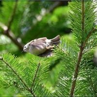 小さな小さな鳥は