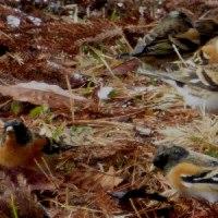 この冬一番の寒波で一番の冬小鳥に