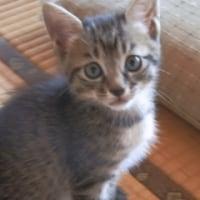 【長年の疑問回答】やっぱり猫には「お化け」が見えているの?の回答?