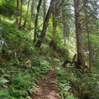 飛騨位山トレイルのコース下見。夏は雰囲気が違ってましたー。 20160724