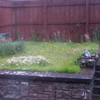 裏庭の芝生はお花畑