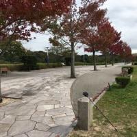 岡崎中央総合公園 ノルディックウォーキング教室