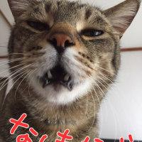 秘技、ウインク(^_-)