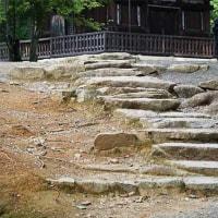 23日の散歩 ( 仁和寺から地蔵院、千本釈迦堂への散歩でアジサイ便り? )