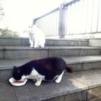デブ猫、良いか悪いか?