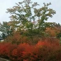 富士吉田  紅葉 小雨になってきた。