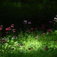 2017/06 奥日光クリンソウ物語3 ~仙人の庭~