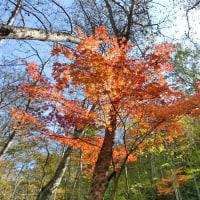 エノキタケで、倒木の上は大混雑 (*^^)v
