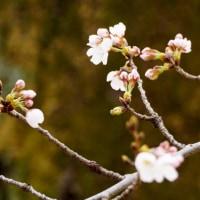 樹木や雑草が春らしく見えてきた武蔵野公園です その2