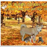 木枯らしの中にももの声が聞こえた それは失った家族への愛おしさだろうか
