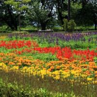 小さな庭の見本園 イングリッシュガーデン