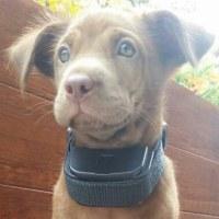 犬のしつけに大活躍する器具 「しつけくん」