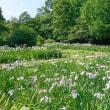 智光山公園 花菖蒲まつり開催