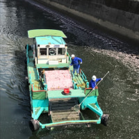 川も掃除と、良い刺激