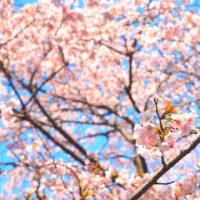 早春の神代植物園