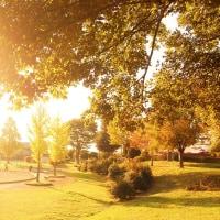 黄昏公園、秋のかほり。