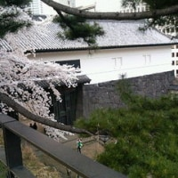 皇居周辺のお花見