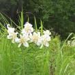 花の丘公園の花とダイサギ