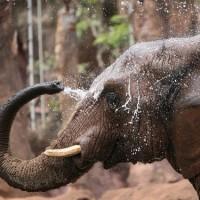 象の水浴び