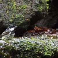 5月14日、日帰り鳥見   in 山中湖/大洞の水場