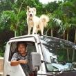 車上の犬、島で話題に 多良間の「セコム」