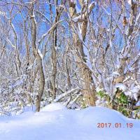 ドカ雪が降りました