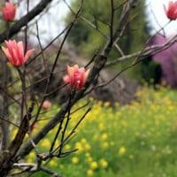 春の野辺 Ⅰ