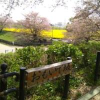 4月17日(月曜日)‥権現堂公園多目的運動広場から