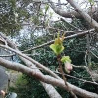 ~~春です☆ いそざき~~