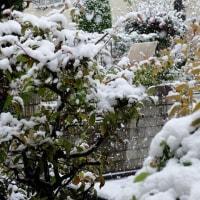 ★11月の観測・54年ぶりの初雪だそうです。