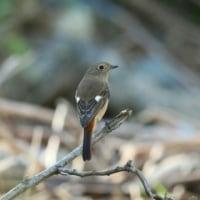 荒川中流で見られた鳥