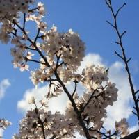 山岳点景:桜空