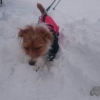 楽しい雪遊び♪