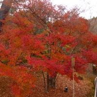 京都ツアー 2